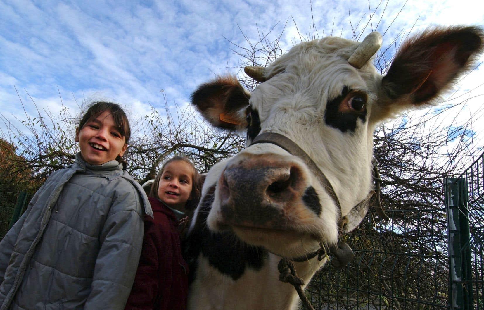 La vie à la ferme et le contact avec les animaux offrent un réel programme d'entraînement pour le système immunitaire.