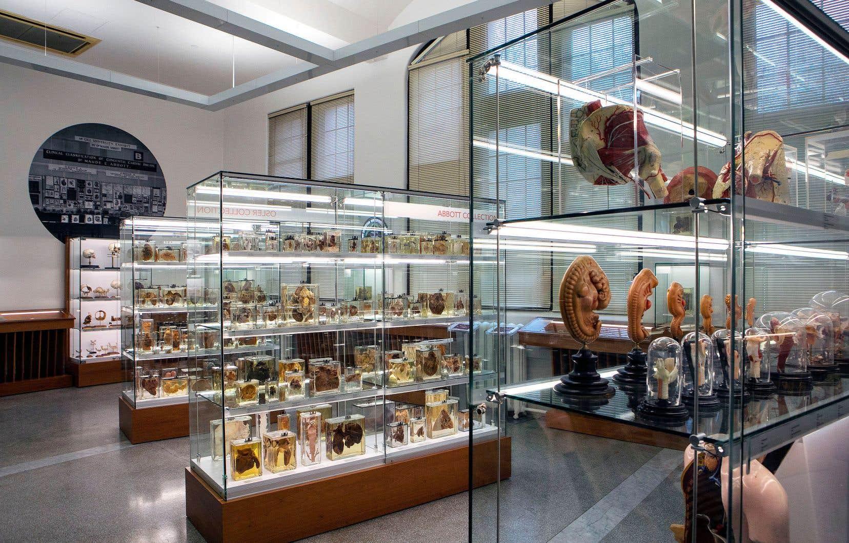 Le musée de l'Université McGill, vieux de 200ans, compte quelque 1800 objets, dont 250 à 300 sont exposés au public, mais aussi aux étudiants à des fins d'apprentissage.