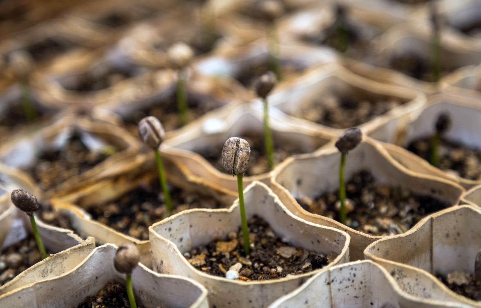 Le programme de Croquarium permet aux jeunes de planter à l'intérieur de leur école des herbes et différents légumes dans un petit potager. Au printemps, ils pourront dans certains cas les transférer dans un jardin extérieur.