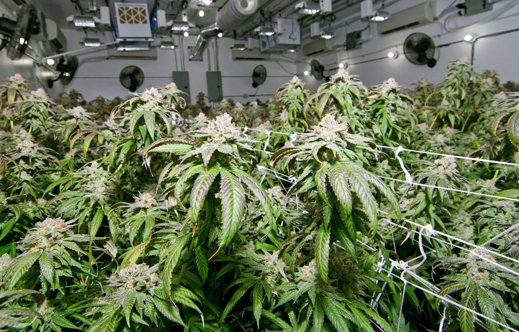 Des groupes qui défileront devant la commission parlementaire étudiant le projet de loi sur le cannabis plaideront pour le maintien à 18ans de l'âge légal pour posséder ou consommer de la marijuana. Les municipalités tenteront pour leur part de défendre leurs pouvoirs en réclamant le retrait de l'article interdisant à quiconque de fumer du cannabis dans l'espace public.