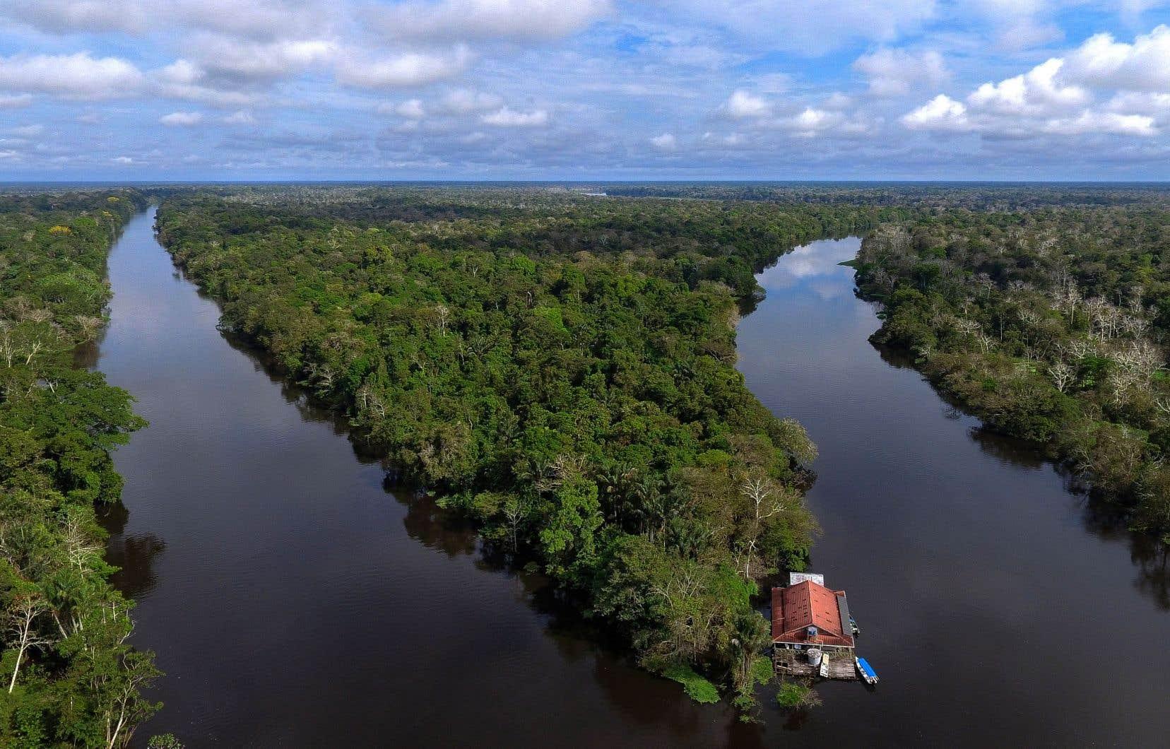 Le meurtre de Chico Mendes et l'indignation qu'il a suscitée sont souvent qualifiés de tournant pour l'établissement de réserves forestières et de freins à la déforestation de l'Amazonie.