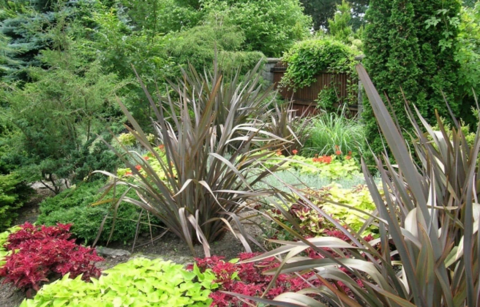 Le lin de Nouvelle-Z&eacute;lande, un &eacute;l&eacute;ment structurant d&rsquo;un massif, &agrave; l&rsquo;entr&eacute;e du jardin alpin, au jardin botanique de Montr&eacute;al.<br />
