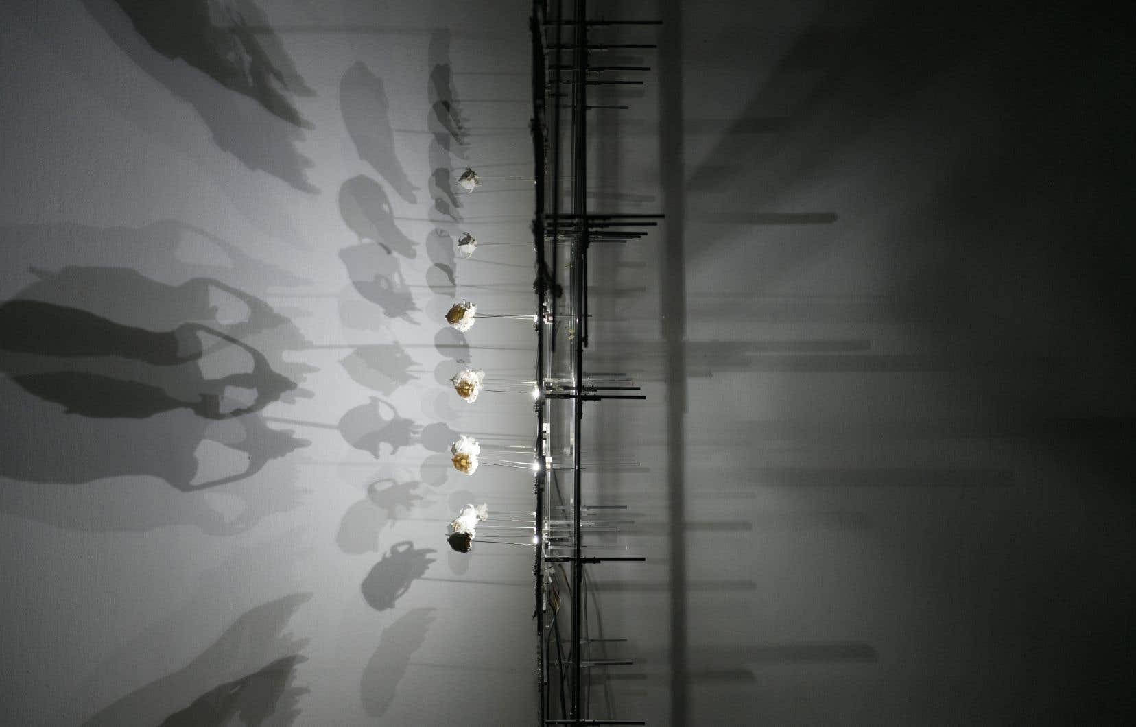 L'artiste rapproche l'informatique et la biologie à partir d'images de crânes de chauves-souris («Chiroptera» de leur nom savant) tirées de données tomographiques.