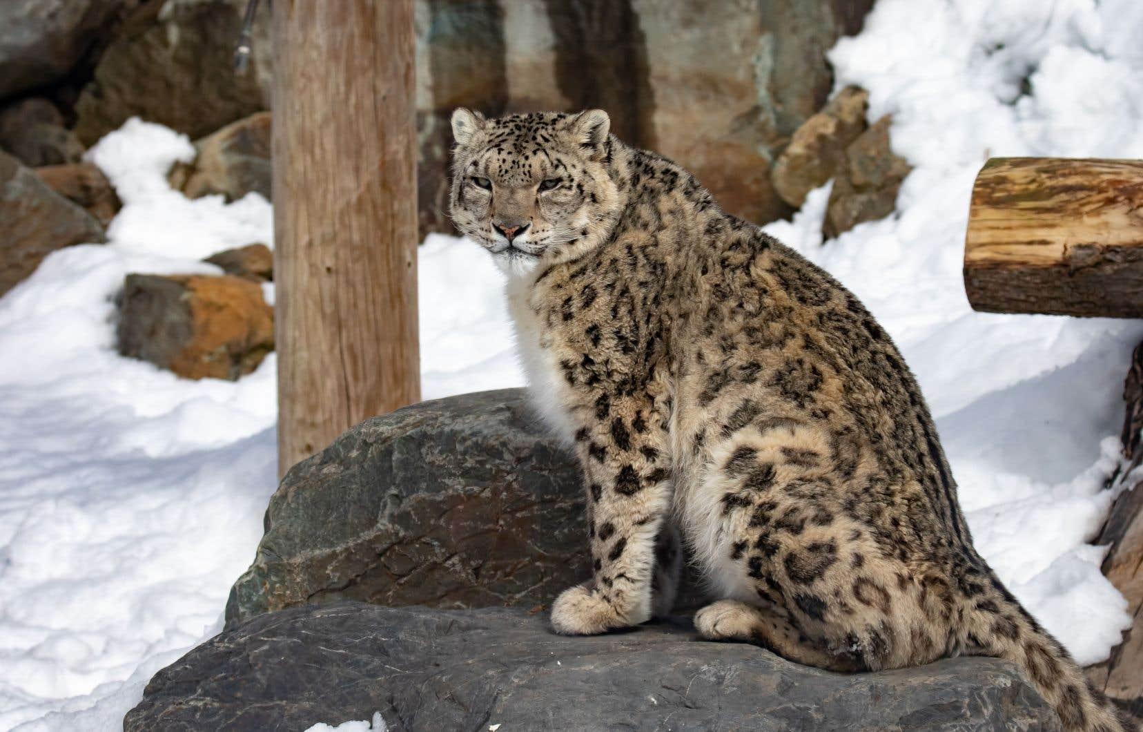 À une époque où de plus en plus d'espèces sont en voie d'extinction, le tourisme lié à l'observation animale permet une trop rare occasion d'admirer des reptiles, oiseaux et mammifères.