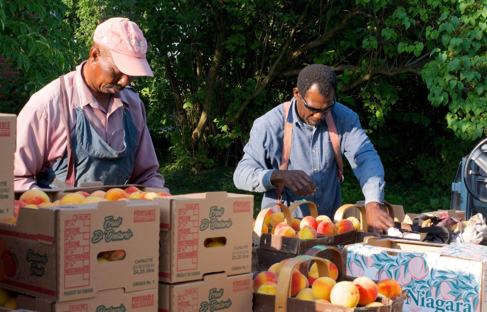Le taux d'emploi pour les réfugiés somaliens est de 44%.