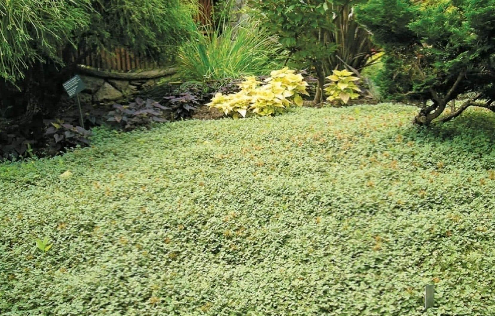 Il court il court le couvre sol le devoir for Jardin japonais plantes couvre sol
