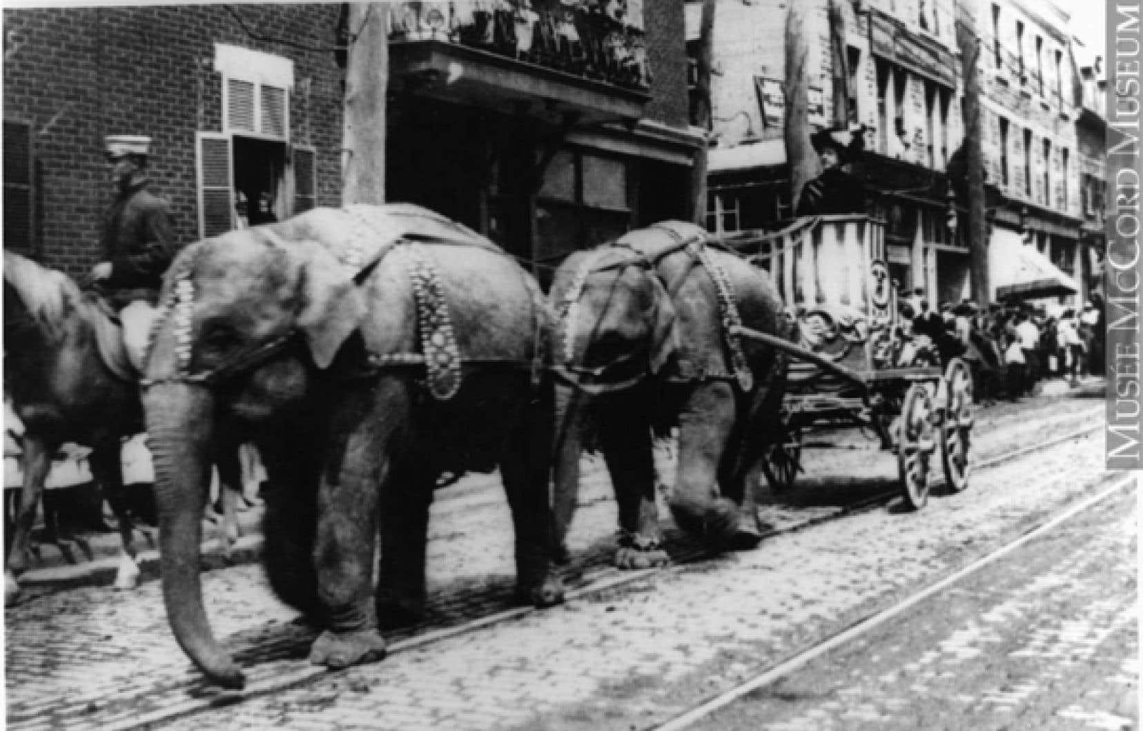 Des éléphants sur la rue St-Laurent, 1910<br />