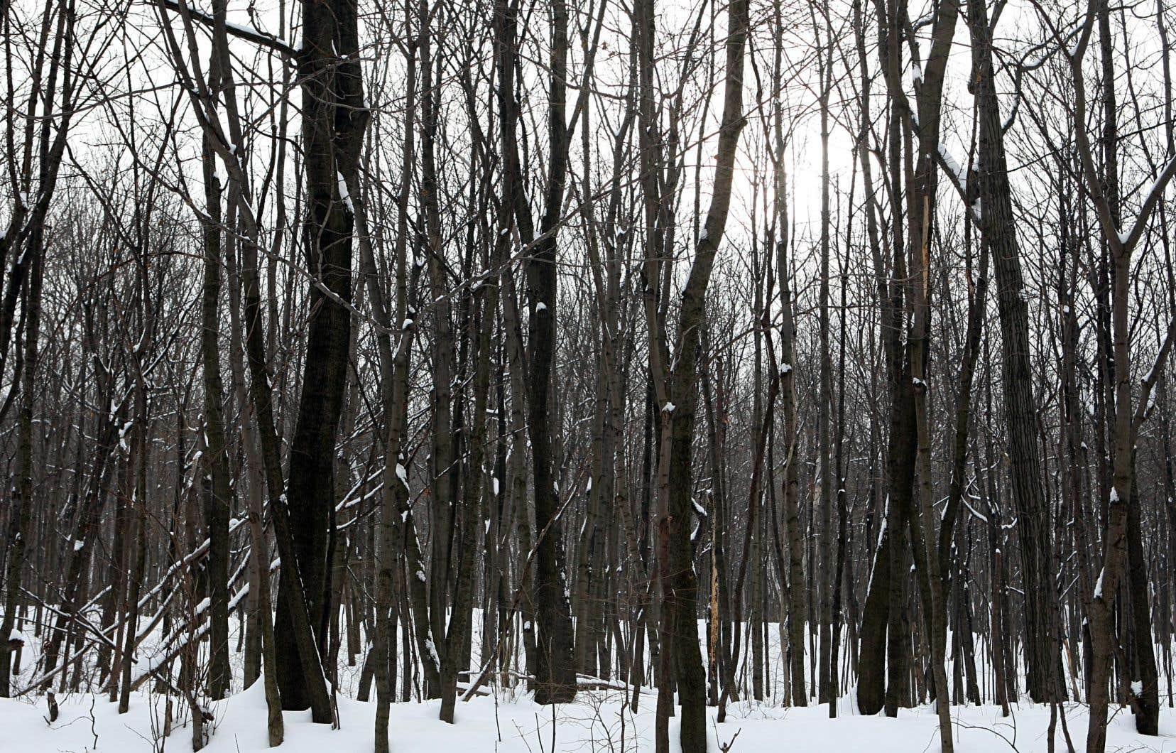 «Aujourd'hui, le nouveau régime forestier demeure une oeuvre inachevée», estime l'auteur.
