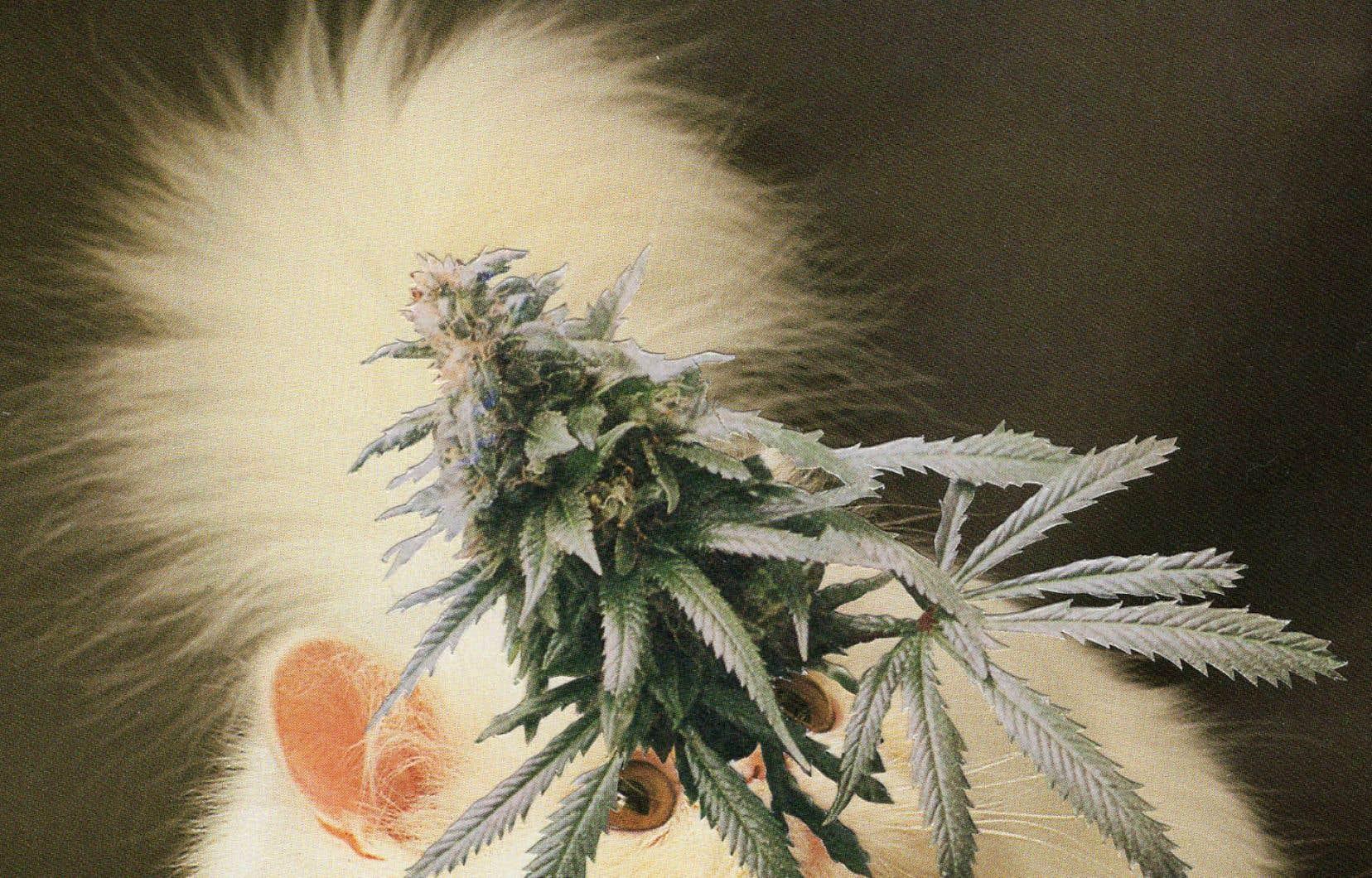 Le magazine «Broccoli» explore le thème du cannabis sous différentes facettes, notamment sa représentation dans l'art.