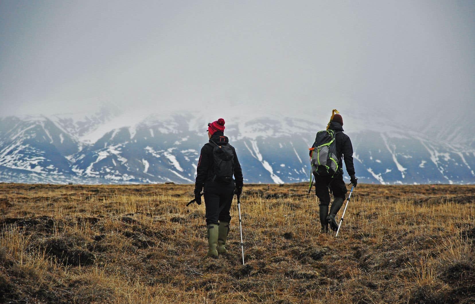L'équipe qui étudie les plectrophanes en sortie dans la vallée du camp 1 sur l'île Bylot, à la recherche de nids.