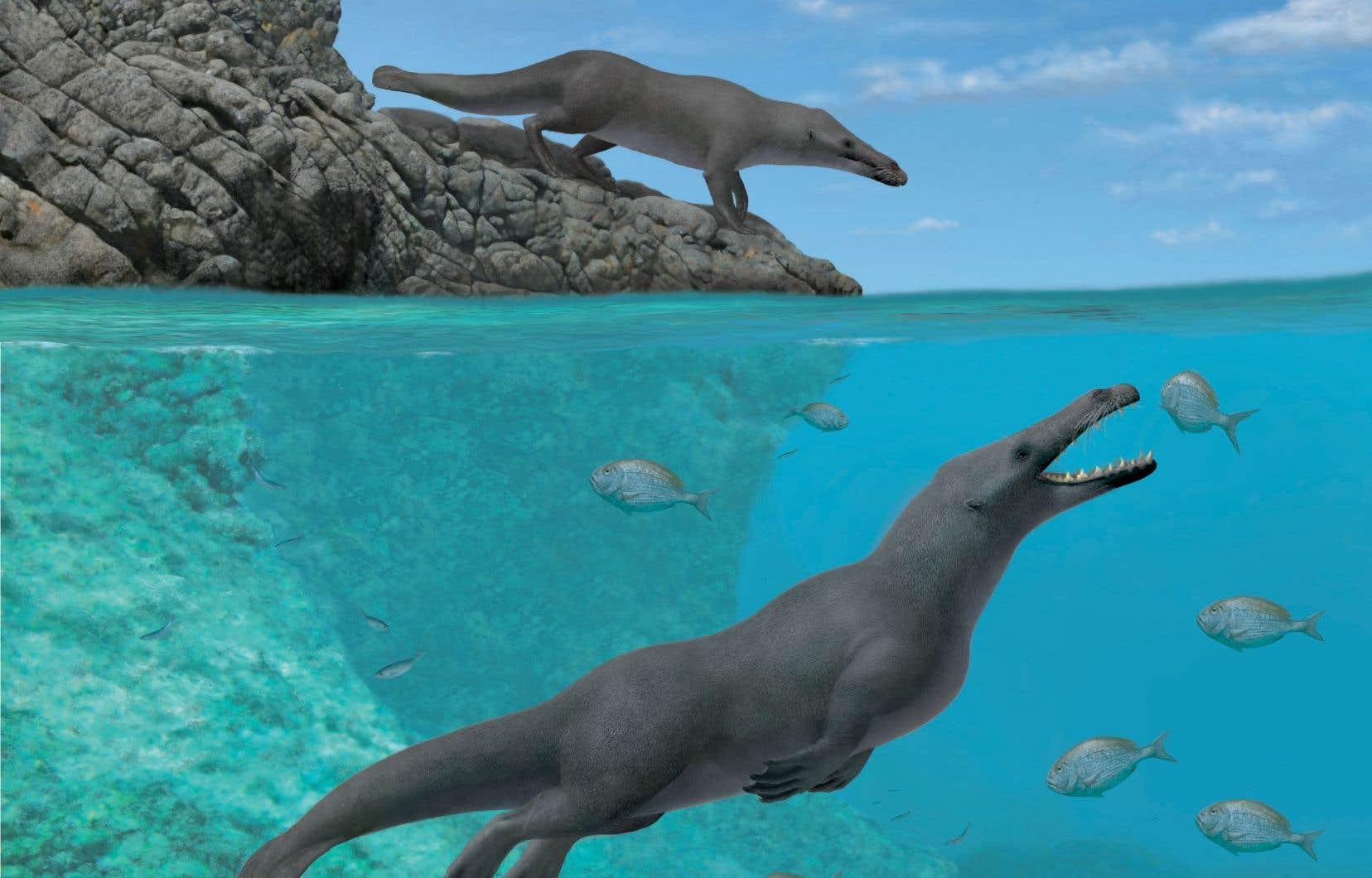 Des paléontologues ont déterré sur la côte du Pérou le fossile bien conservé d'un ancêtre amphibie quadrupède des baleines.
