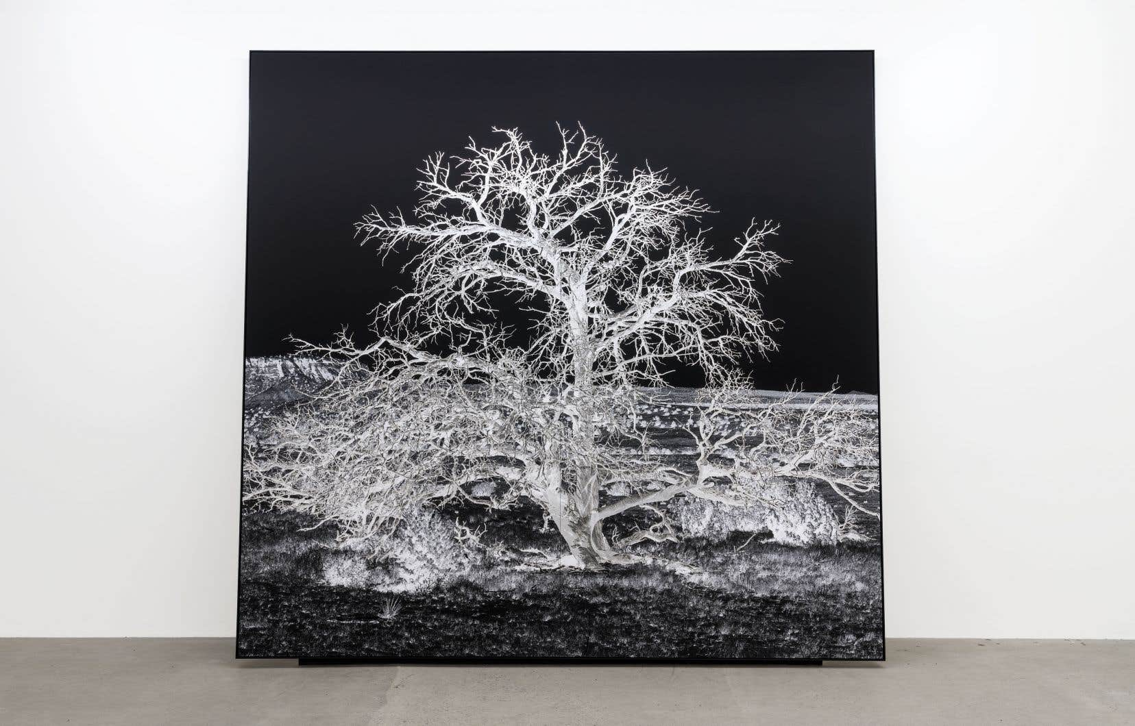Geneviève Cadieux, «Arbre seul (la nuit)», 2018