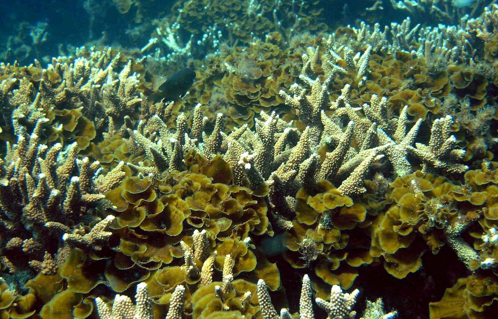 Le projet a notamment été contesté au cours des dernières années en raison des risques pour la Grande Barrière de corail, notamment lors des travaux d'expansion portuaire.