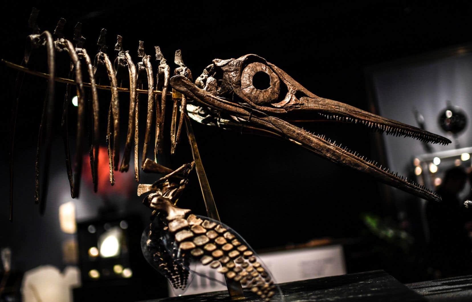 Un squelette d'<em>Ichtyosaurus</em> avait été mis en vente par l'hôtel Drouot en novembre dernier.