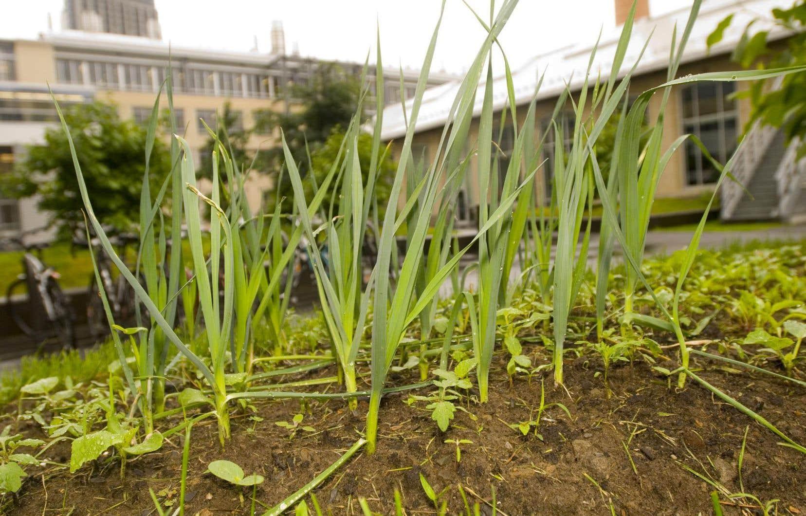 L'interaction sol/plantes est souvent peu considérée dans l'entretien des espaces verts urbains.