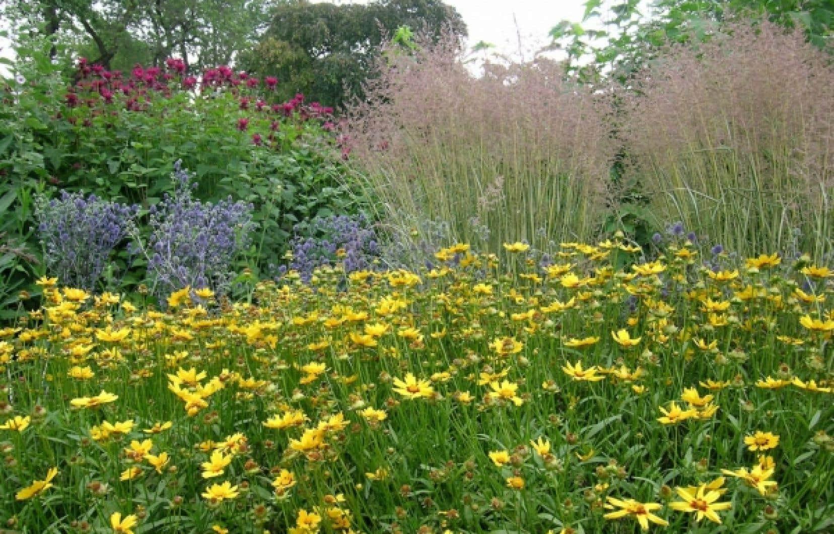 Massif des talentueux horticulteurs du jardin botanique de Montr&eacute;al. Coreopsis, Eryngium, monardes et gramin&eacute;es.<br />