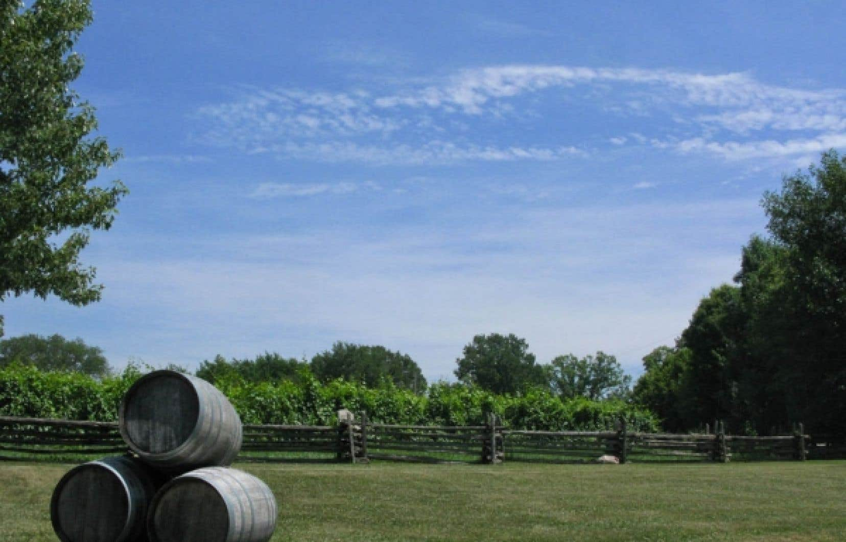 Vignoble de &laquo;The Grange of Prince Edward Vineyards and Estate Winery&raquo;.<br />