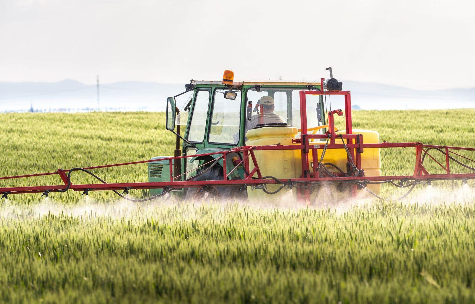 Le glyphosate est l'herbicide le plus utilisé au monde pour le contrôle des mauvaises herbes par les producteurs agricoles.