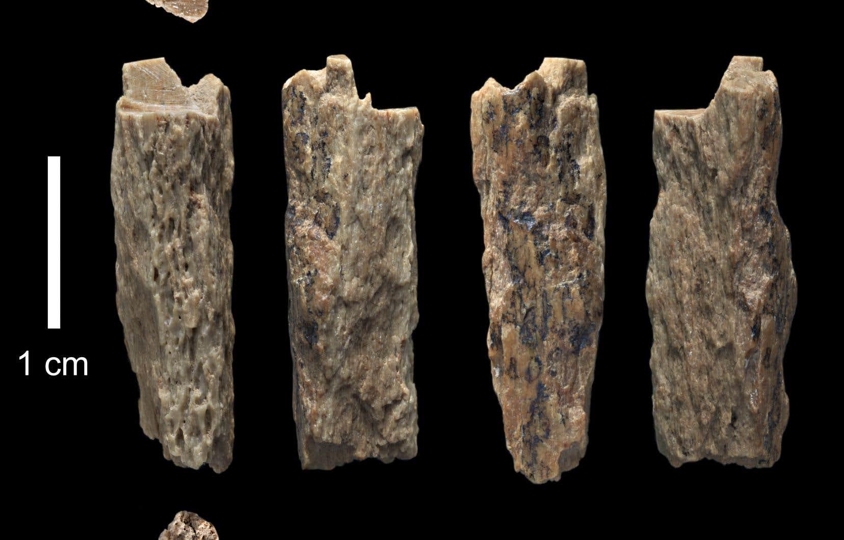 L'espèce a été identifiée en 2010 grâce à l'analyse de l'ADN ancien d'un petit os de doigt trouvé dans la grotte de Denisova, dans l'Altaï (Russie).