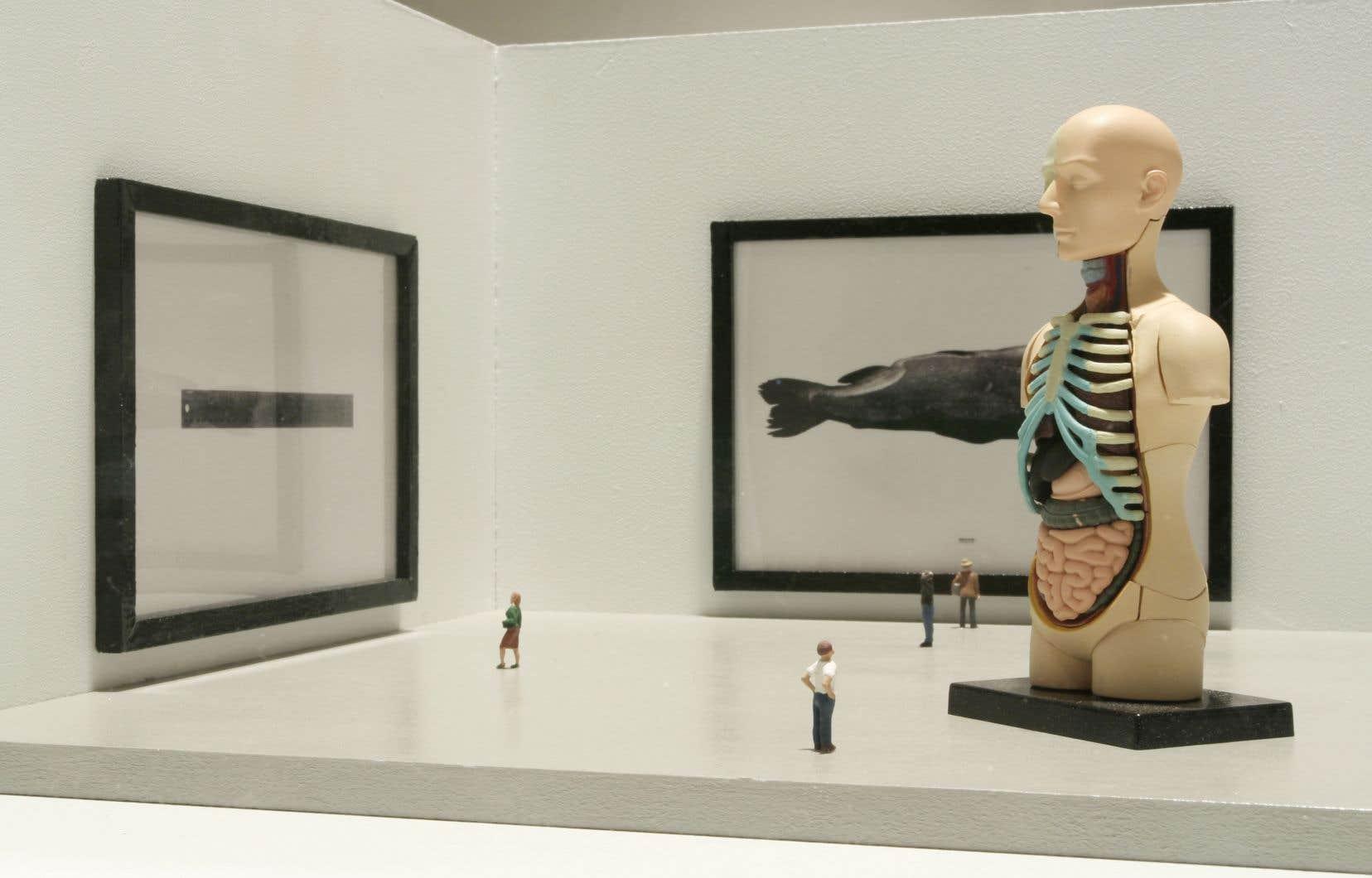 Mathieu Latulippe, «Sans titre, Histoire naturelle», 2008