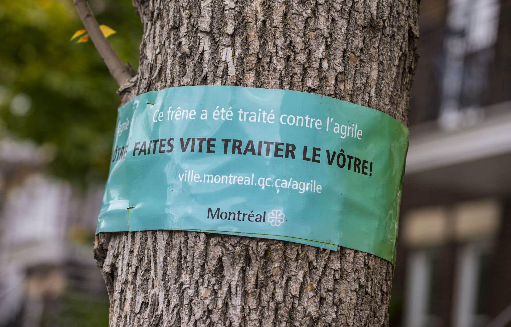 L'an dernier, la Ville de Montréal a traité 26 830 frênes publics et 3864 frênes situés sur des propriétés privées.