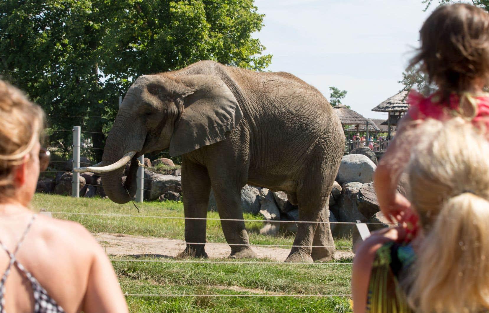 Certaines institutions, comme le Zoo de Granby, sont partie prenante de programmes de recherche voués à la protection d'espèces menacées et consacrent de vastes portions de leurs profits à ces activités.