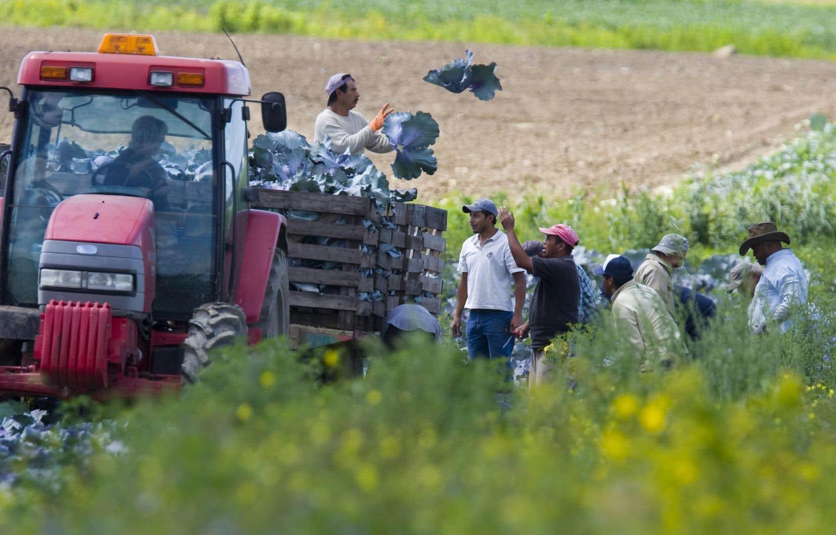 Selon le juge, il est «urgent et impératif» que l'État mette sur pied une organisation pour permettre aux travailleurs saisonniers de connaître leurs droits et obligations.