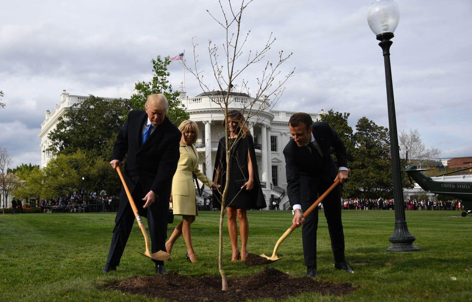 Le président américain, Donald Trump, et son homologue français, Emmanuel Macron, ont planté l'arbre devant la Maison-Blanche, en avril 2018.