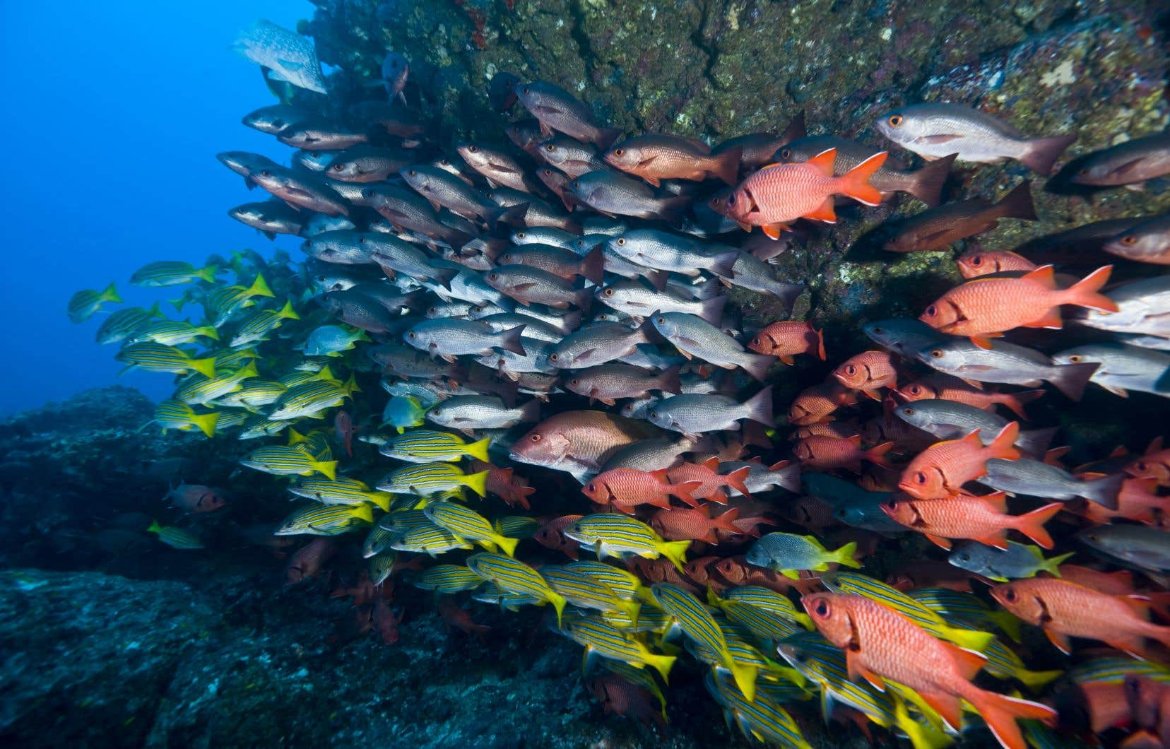 Les poissons font les frais des manquements cumulés à tous les maillons du réseau trophique.