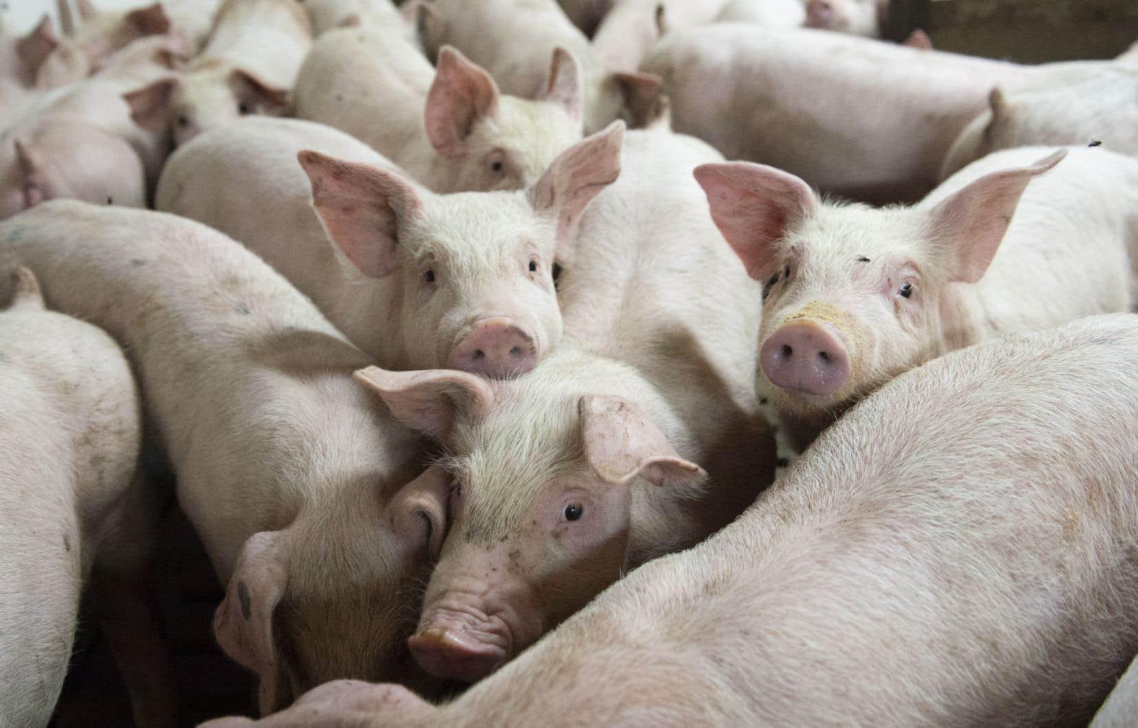 La Chine a suspendu temporairement toutes les importations de viande canadienne mercredi.