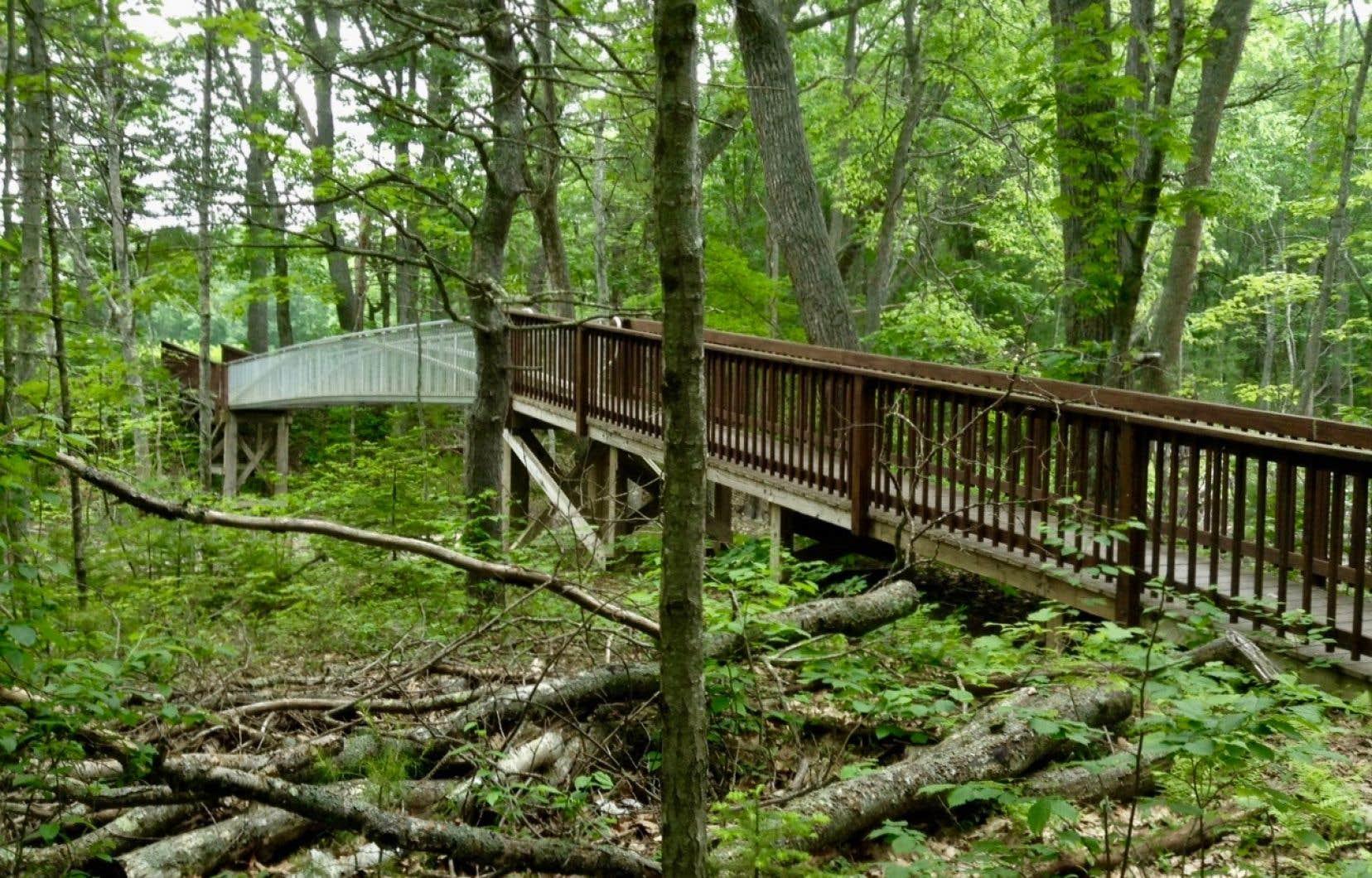 Au Kennebunkport Conservation Trust, un réseau de 25 kilomètres de sentiers interreliés permet de belles randonnées à travers les bois.