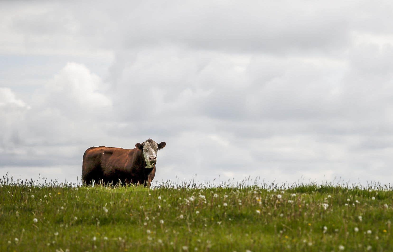 La proportion des terres de la planète consacrées à l'agriculture ne devrait pas augmenter en raison de l'amélioration des rendements, de l'augmentation de la taille des cheptels et d'autres gains de productivité.