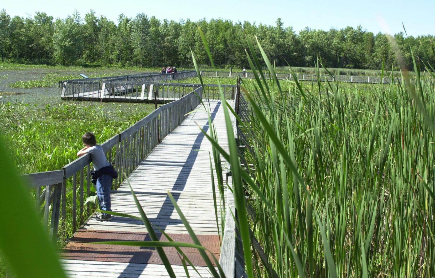 <p>Parmi les parcs touchés, on compte le Parc national de Plaisance, en Outaouais</p>