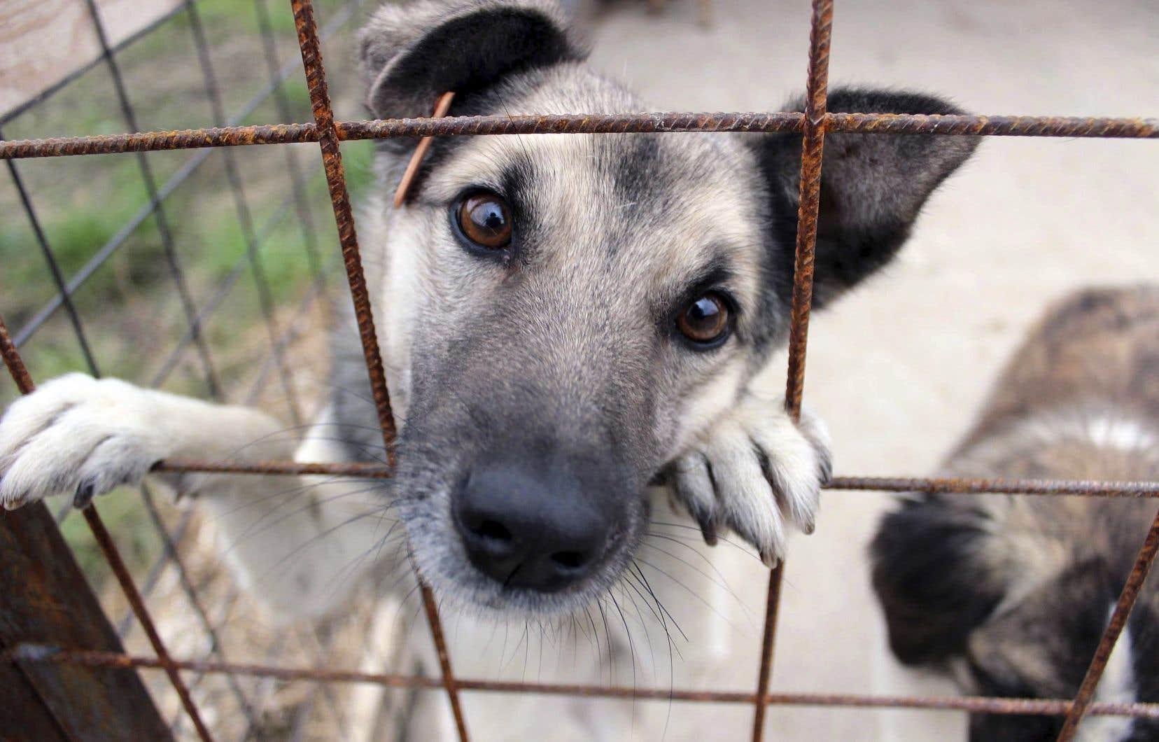 Le règlement de la Ville de Montréal oblige les propriétaires d'animaleries à s'approvisionner dans des refuges ou des cliniques vétérinaires.