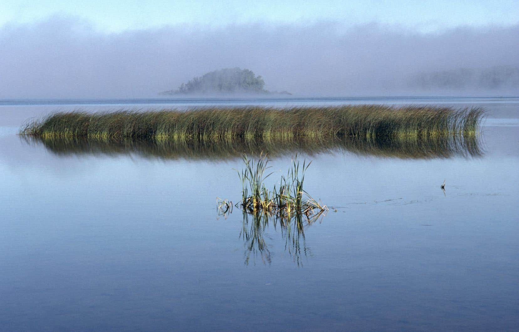Une des nombreuses vues du fleuve signée Michel Dompierre.