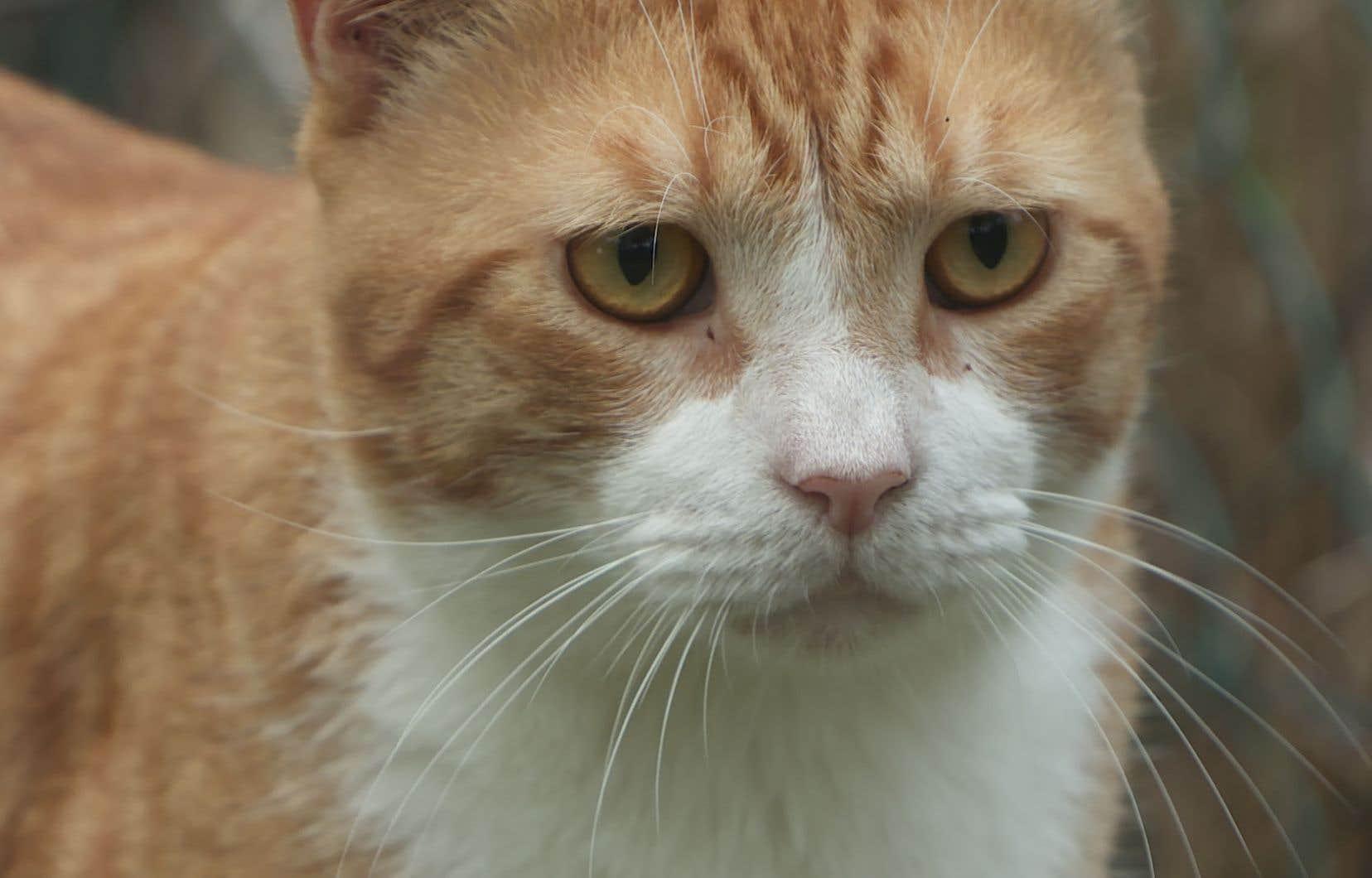 Présent partout dans le monde, le chat a conservé, malgré presque 10000 ans de domestication, des instincts de prédateur.