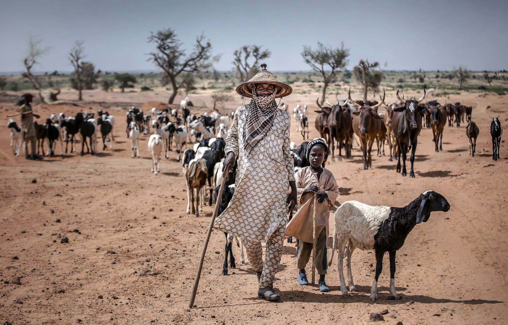 Un nomade fulani et son fils mènent leur bétail près de Maradi, au Niger. La région du Sahel a toujours eu un climat inhospitalier. Mais la hausse des températures cause maintenant des sécheresses prolongées, exacerbant les pénuries de nourriture et forçant des populations à migrer, contribuant ainsi à l'instabilité dans une région déjà marquée par les crises.