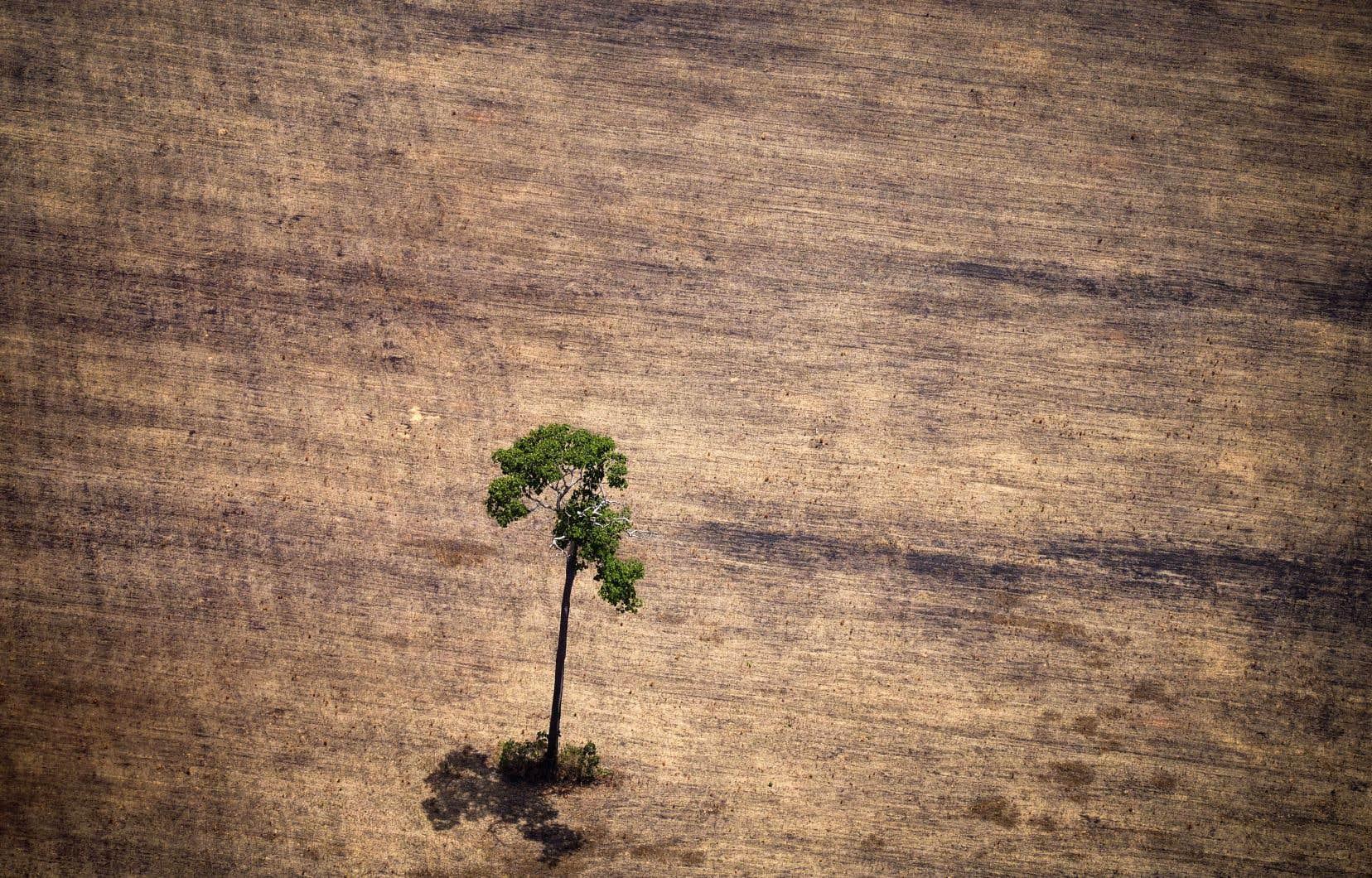 Cette photo prise en octobre 2014 montre une zone déforestée, oùl'exploitation de bois est illégale, au milieu de la jungle amazonienne.