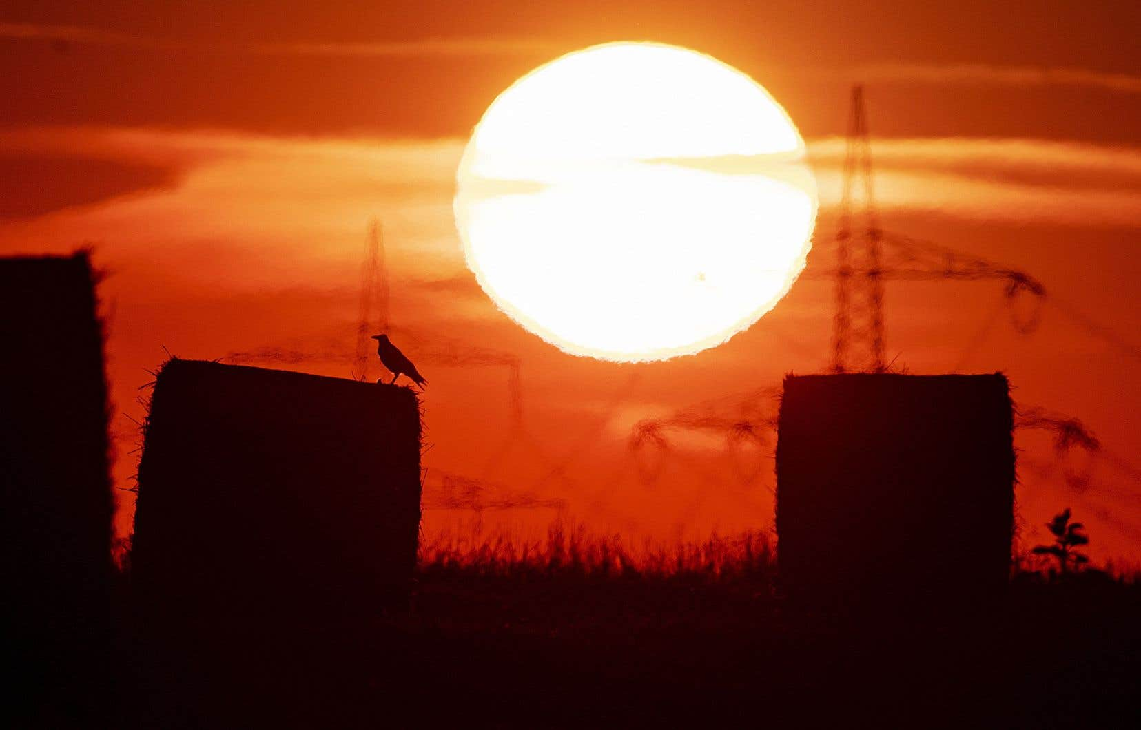 Plusieurs pays européens ont vécu un mois de juillet exceptionnellement chaud cette année, notamment la France, la Belgique et l'Allemagne.