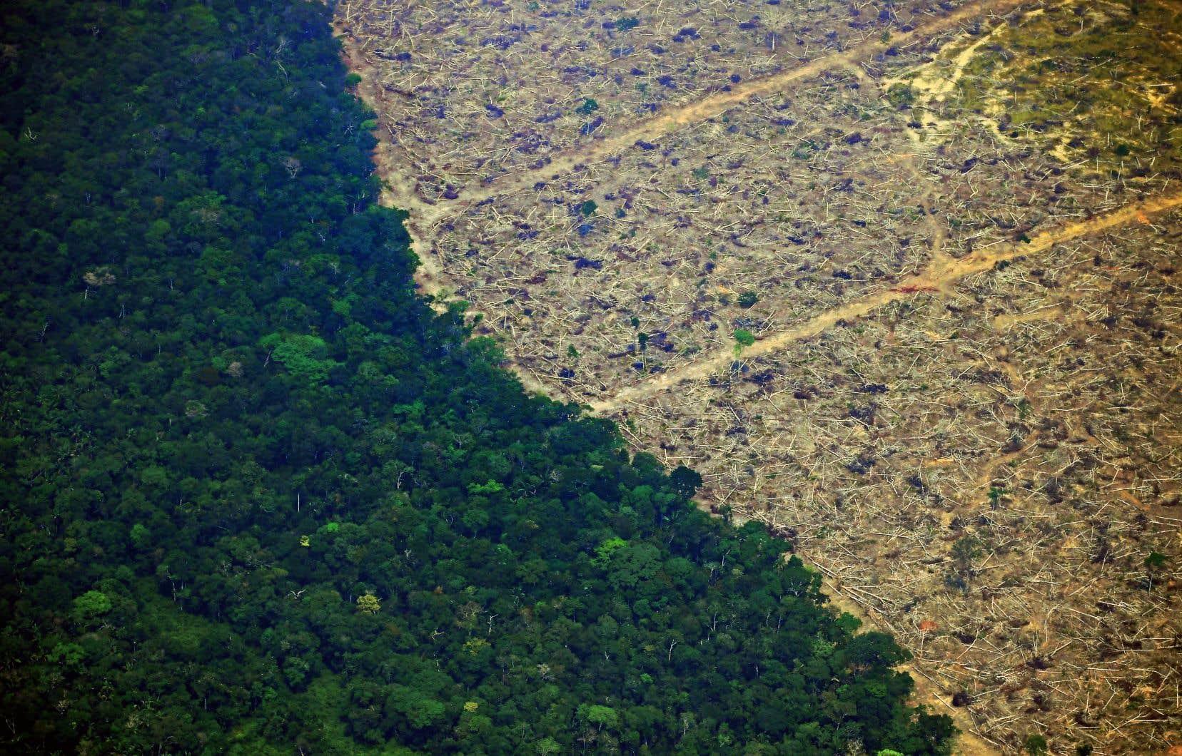 Selon des données publiées au début du mois d'août par l'INPE, la déforestation au Brésil a bondi de 67% sur un an au cours des sept premiers mois de l'année.