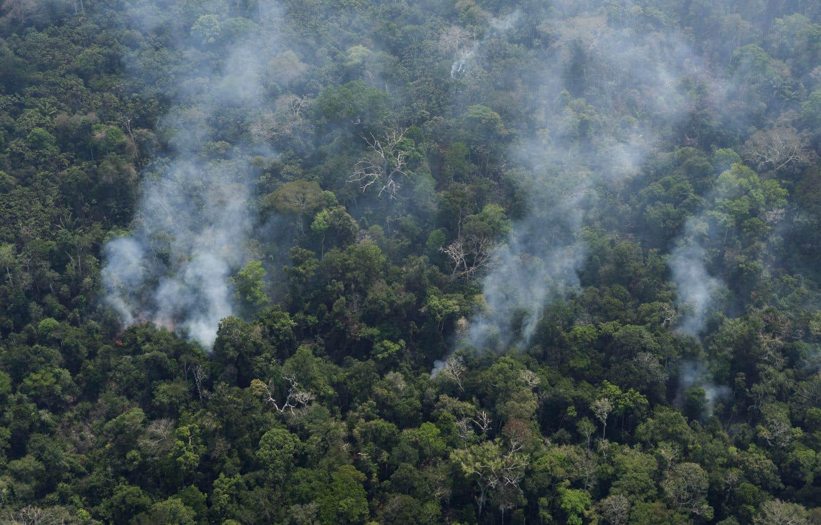 Jair Bolsonaro a autorisé vendredi l'armée à se déployer pour combattre les incendies. Il a affirmé être déterminé à protéger l'Amazonie.