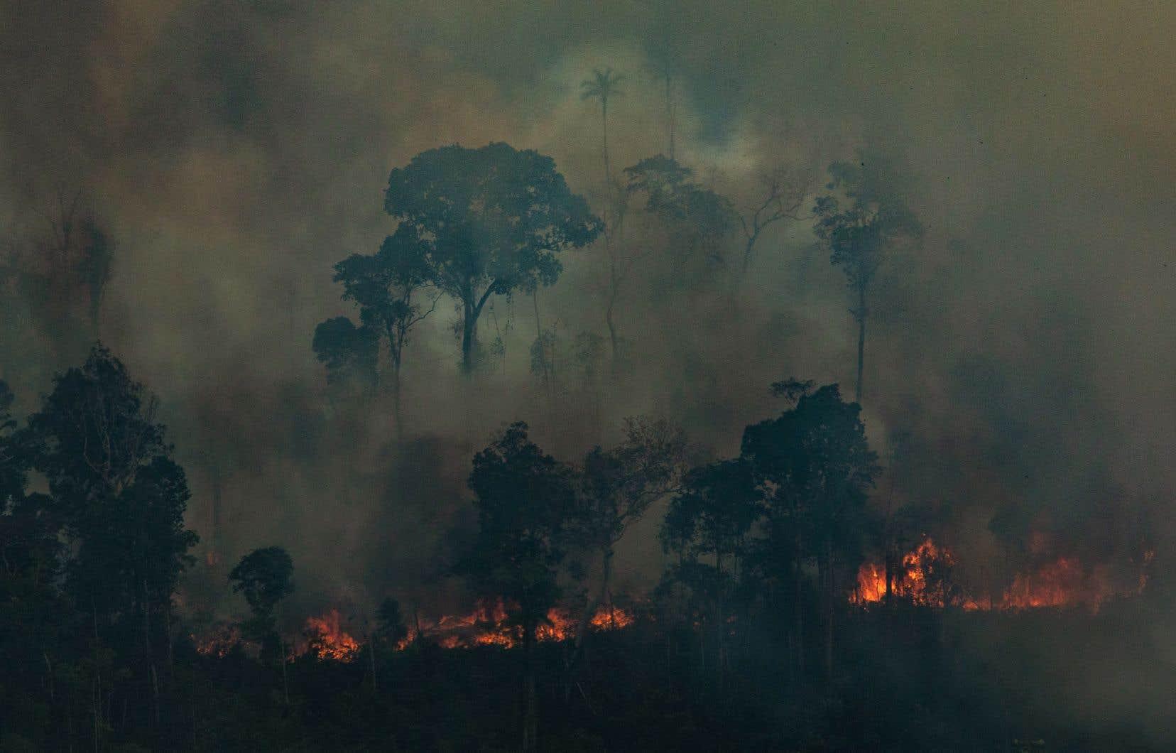 De vastes surfaces de la région amazonienne ont été dévastées par les pires incendies recensés depuis des années.