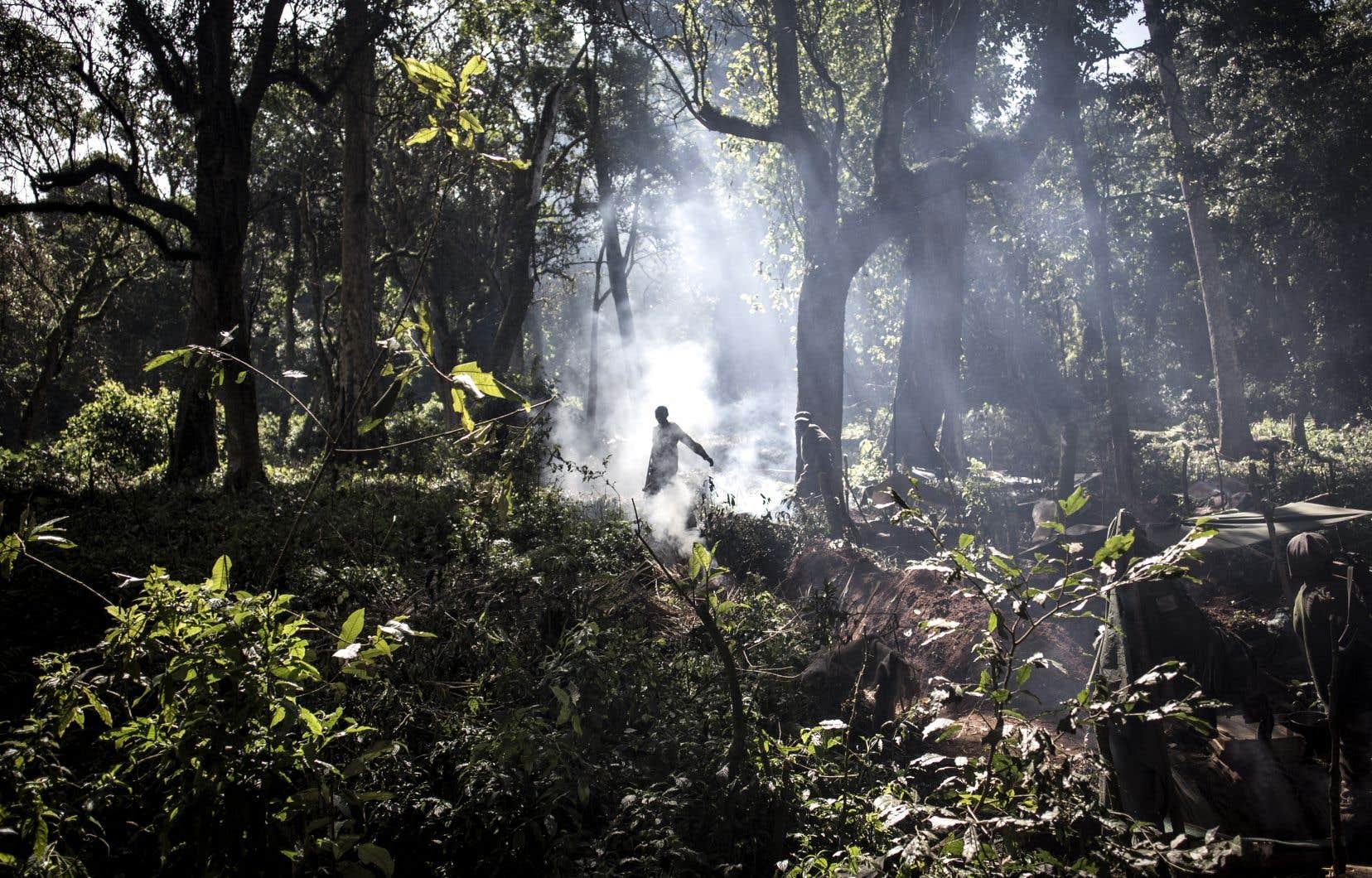 La forêt du bassin du Congo est communément comparée au «deuxième poumon vert» de la planète.