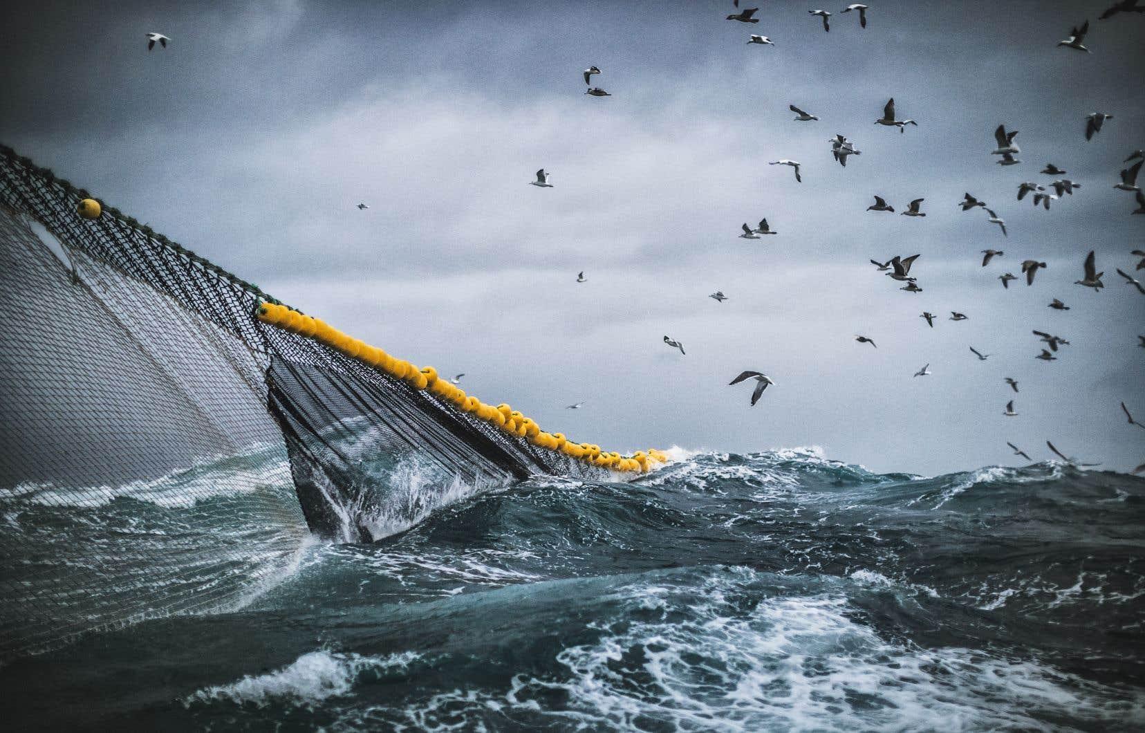 Ce traité sur la haute mer est considéré comme urgent pour stopper la perte de la biodiversité marine et l'extinction de certaines espèces.