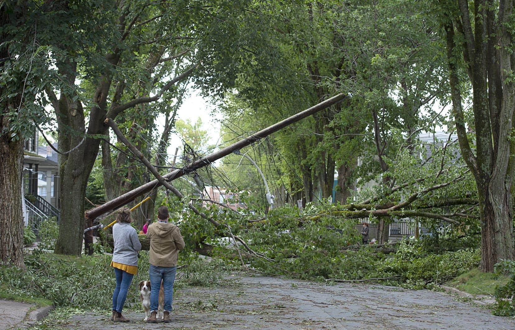 La plupart des pannes en Nouvelle-Écosseont été provoquées par de puissantes rafales, des inondations ainsi que des arbres déracinés et leurs débris.
