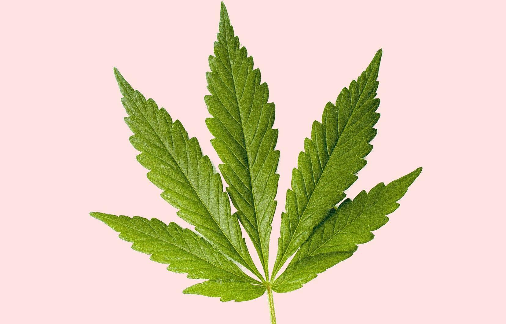 La mesure phare du gouvernement libéral en matière de droit criminel demeure la légalisation de la marijuana, qui fêtera son premier anniversaire en pleine campagne électorale, le 17octobre.