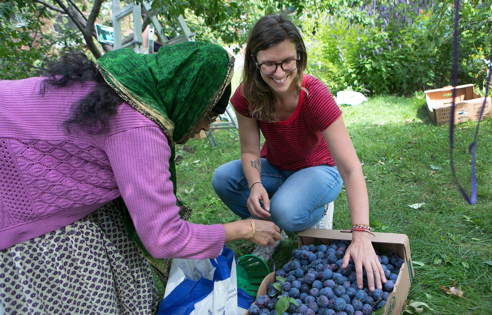 Pascale Nycz (sur la photo), Ann-Élise Stidham et Jimena Campos sont bénévoles pour l'organisme Les Fruits défendus, un collectif montréalais de cueillette urbaine.