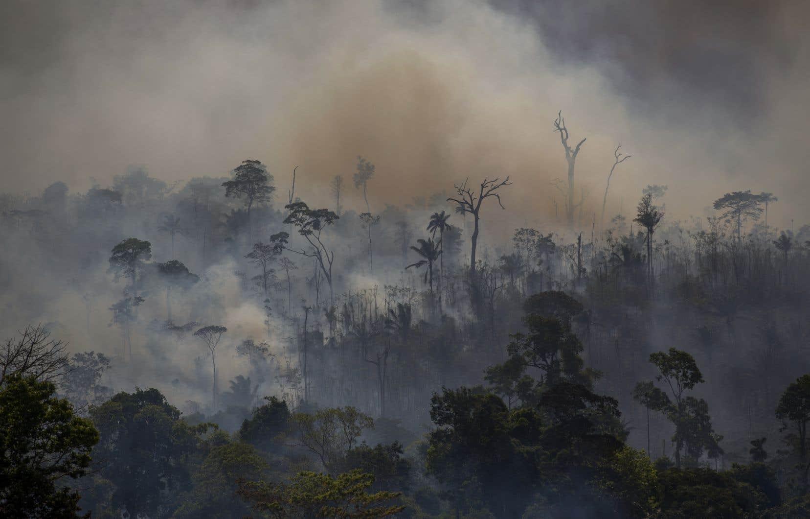 La déforestation de l'Amazonie brésilienne a quasiment doublé entre janvier et août.