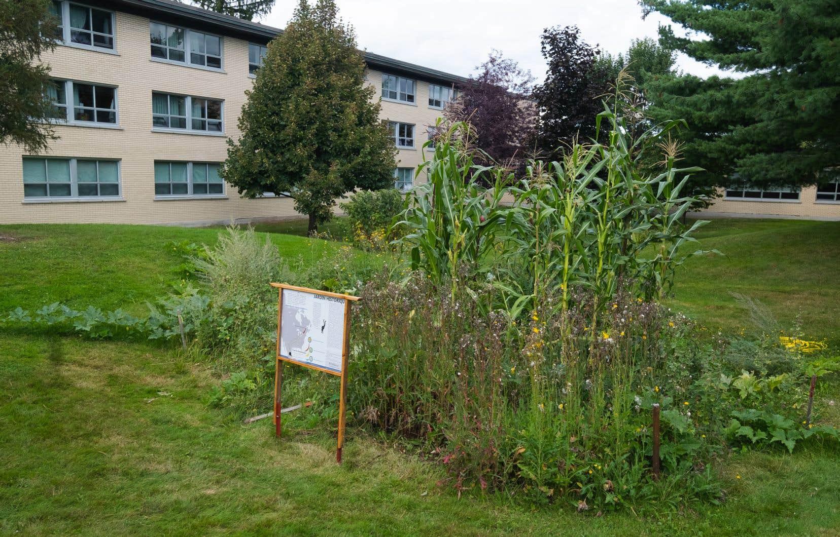 Le jardin ancestral autochtone a été réalisé par deux étudiants en histoire, Joshua Vachon et Antoine Gauthier-Trépanier.
