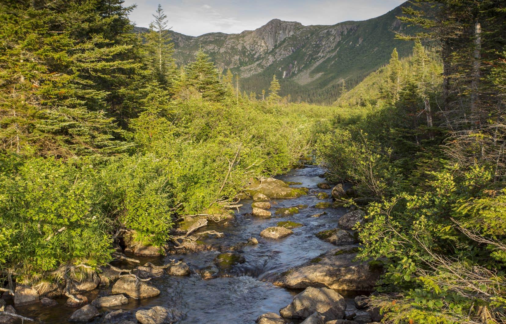 Le mont Albert, situé dans le parc national de la Gaspésie